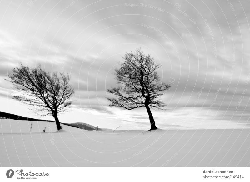 Sky Nature White Tree Vacation & Travel Winter Loneliness Cold Snow Mountain Horizon Germany Weather Background picture Wind Leisure and hobbies