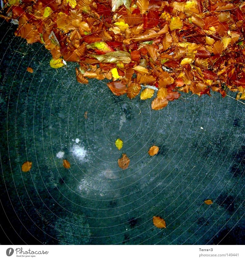 fall down Leaf To fall Multicoloured Orange Red Brown Yellow Warmth Autumn Seasons Street Asphalt Tar Blue Black Gray Skidmark Tire Tracks Patch White leafy sky