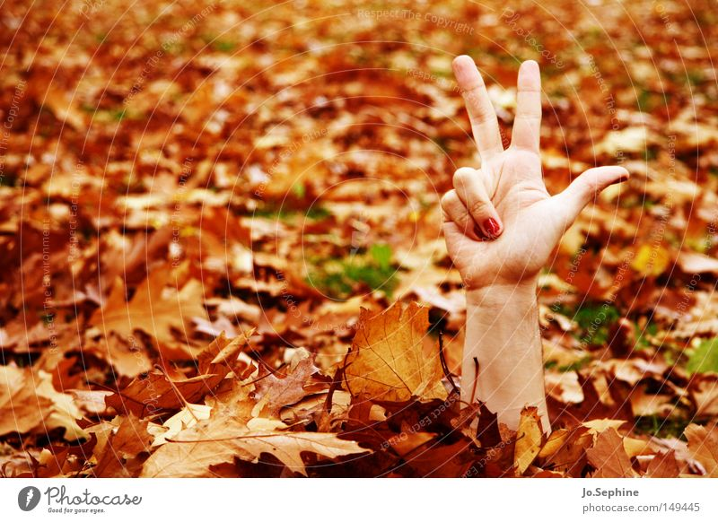 3-2-1, here I come! Hand Autumn Leaf Communicate Trashy Crazy Bizarre Zombie Undead Frightening Autumn leaves Seasons Hide Exceptional Whimsical Fingers