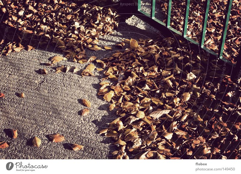 Nature Tree Colour Leaf Winter Yellow Warmth Autumn Wall (barrier) Background picture Door Earth Gold To go for a walk Floor covering Beautiful weather