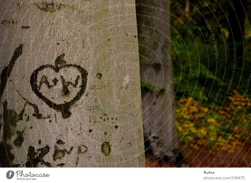 Nature Tree Leaf Love Forest Autumn Emotions Happy Beginning Free Authentic Uniqueness Trust Sign Past Beautiful weather