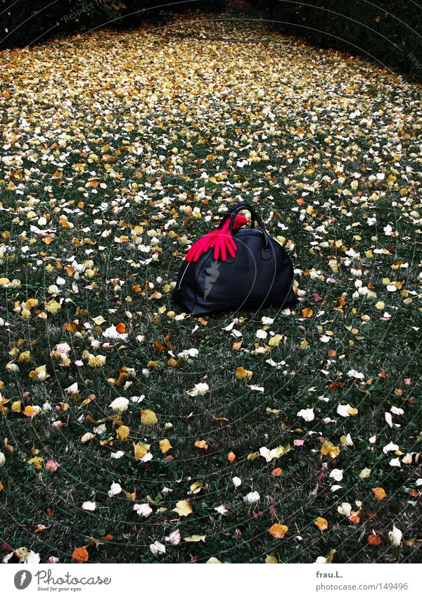 visit Traveling bag Gloves Red Grass Leaf Visitor Goodbye Vacation & Travel In transit No through road Cemetery Lawn Grief Distress Clothing Autumn
