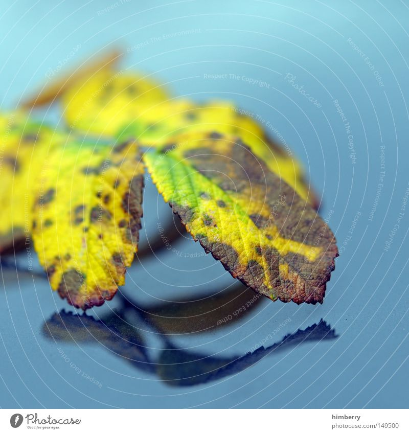 autumn reflection Autumn Leaf Tree Gold Yellow Green Nature Structures and shapes Background picture Park Macro (Extreme close-up) Close-up