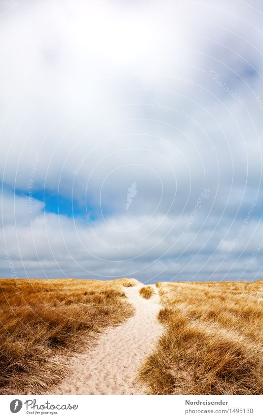 Way in the dunes Vacation & Travel Ocean Nature Landscape Sand Sky Clouds Summer Beautiful weather Wind Grass North Sea Lanes & trails Hiking Fragrance Calm