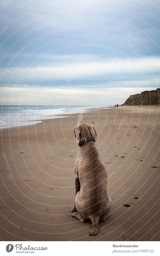 wait... Vacation & Travel Far-off places Ocean Nature Landscape Coast Beach North Sea Animal Pet Dog 1 Sit Wait Blue Brown Love of animals Loyalty