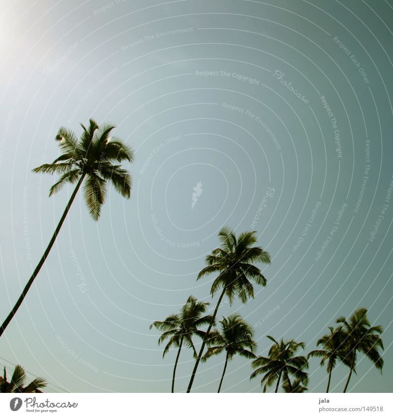 palm sky Palm tree Summer Vacation & Travel Calm Peace Travel photography Relaxation Goa Landscape Land Feature Power Force Concentrate India Blue Bright