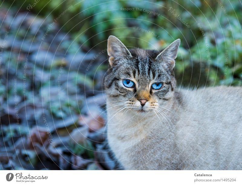Cat Nature Plant Blue White Animal Winter Black Warmth Eyes Grass Gray Garden Brown Jump Orange