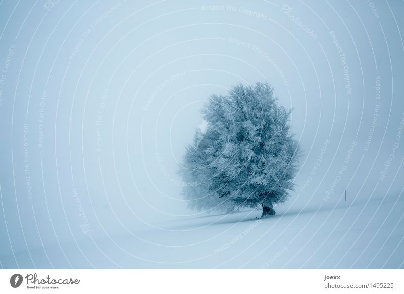 perseverance Nature Landscape Winter Fog Snow Snowfall Tree Old Infinity Bright Beautiful Blue Gray Black Bravery Power Dream Hope Cold Colour photo
