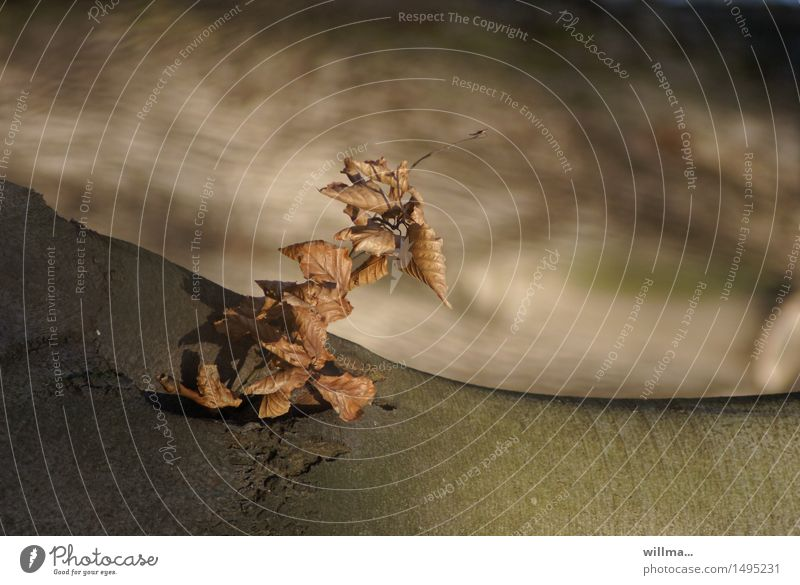 to hold on to it. Leaf Limp Tree trunk Little tree Survive Transience Growth Nature Natural growth Smooth Dusk Brown Shoot Alder Tree bark Exterior shot