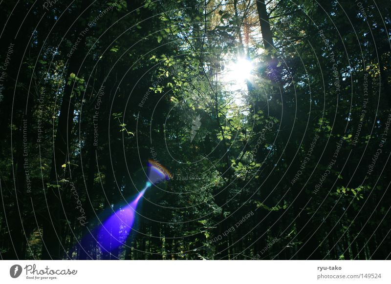 mystica Forest Autumn Sun Aperture Tree Light Breakage Lighting Beautiful Gorgeous Mystic Blue Green Marvelous Snapshot
