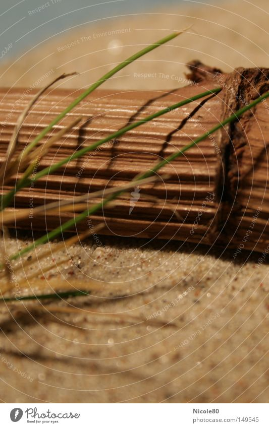 wish it was summer Sand Wood Grass Beach Decoration Warmth Still Life Summer Vacation & Travel Macro (Extreme close-up) Close-up