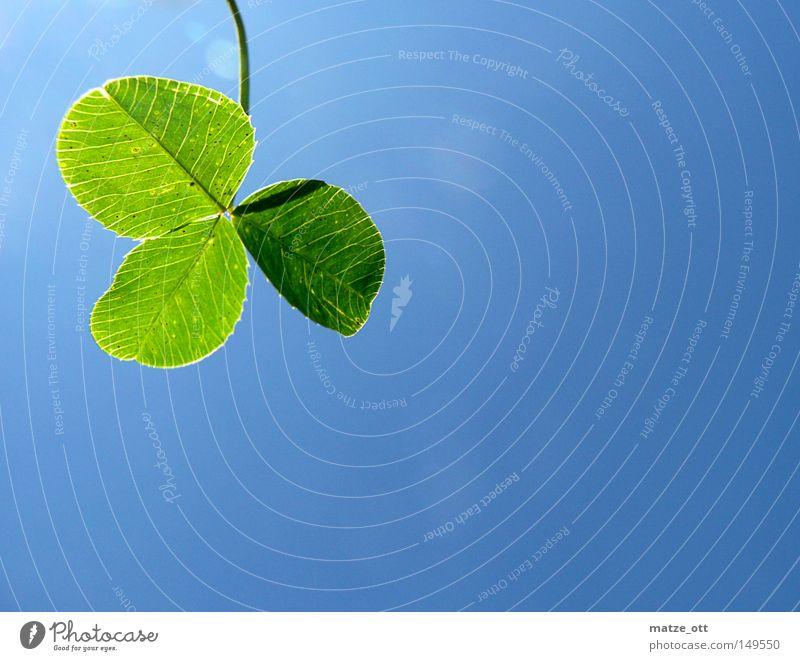 clover Clover Sky Blue Plant Green Cyan Happy