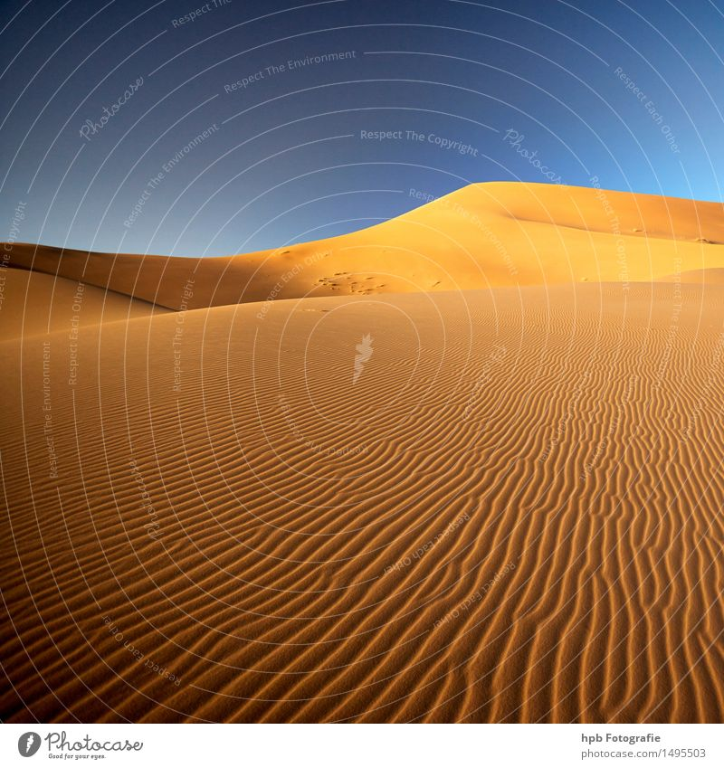 Sahara Vacation & Travel Tourism Trip Adventure Far-off places Freedom Summer Summer vacation Sun Nature Landscape Elements Earth Sand Cloudless sky Climate