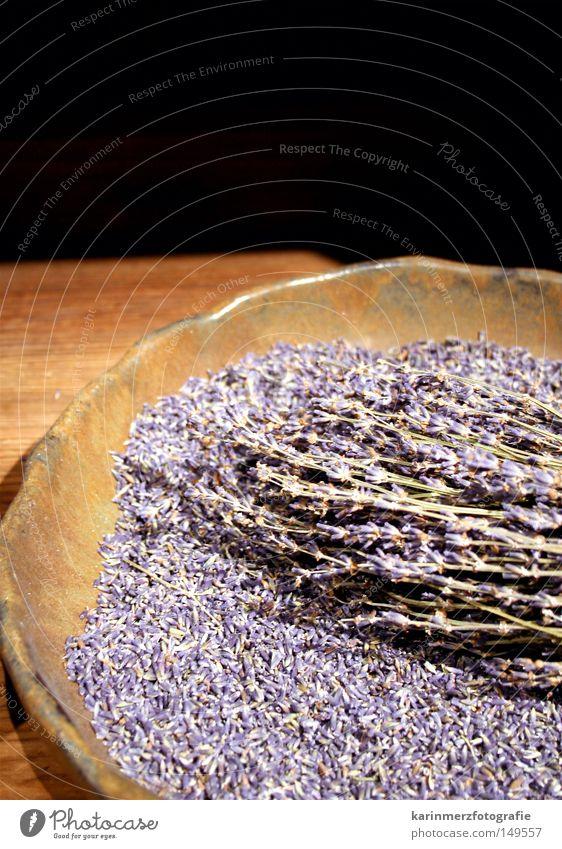 spring fragrance Lavender Plant Violet Fine Fragrance Spring Blossom Plate Table Exhibition Bouquet Close-up Jewish museum Medicinal plant