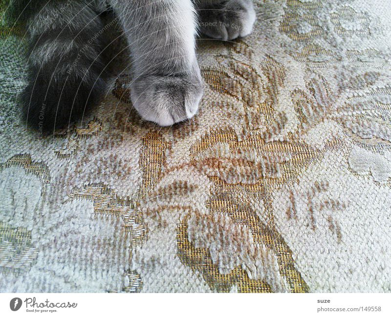 house cat Armchair Cloth Pelt Animal Pet Cat Paw 1 Sit Gray Cat's paw Meow Tails Mammal Colour photo Subdued colour Interior shot Pattern Structures and shapes