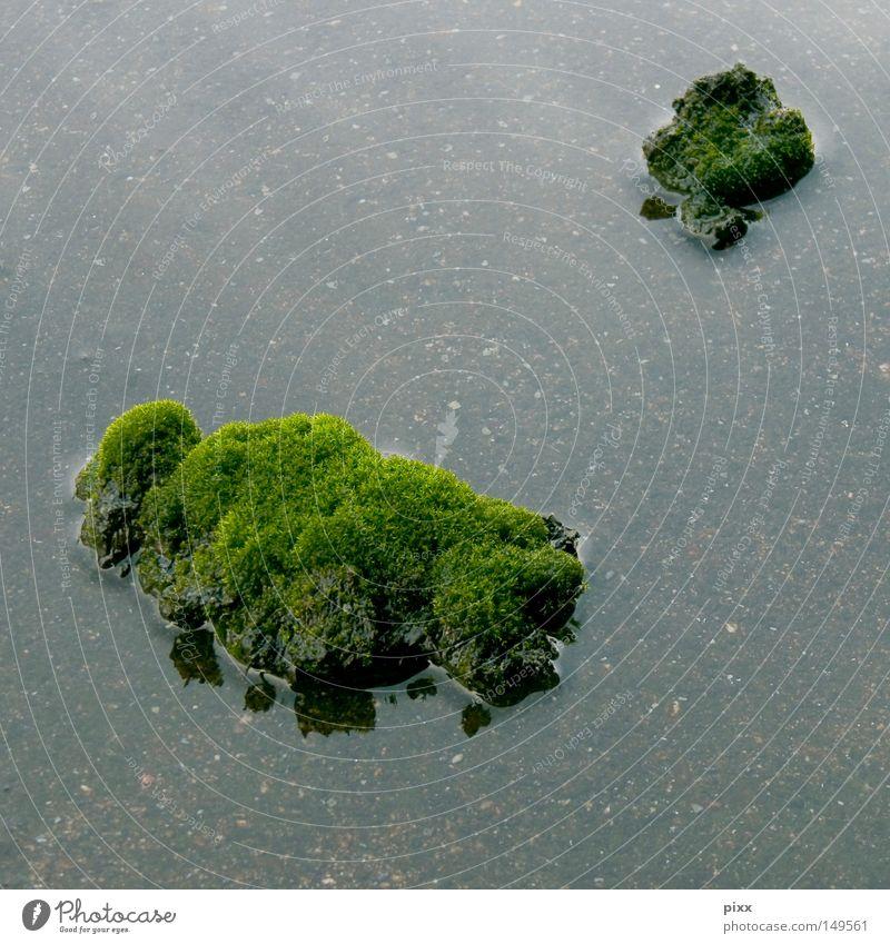 Nature Water Green Plant Ocean Beach Autumn Coast Small Lake Rain Earth Large Island Aerial photograph Virgin forest
