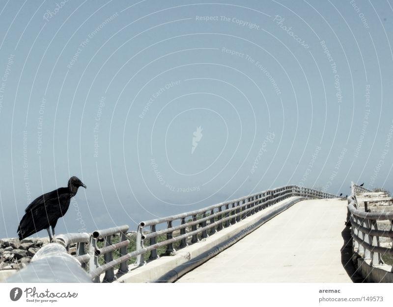 Get it from the vultures Street Vulture Bird Sky Guard Venezuela Bridge Safety Lanes & trails Handrail guarding