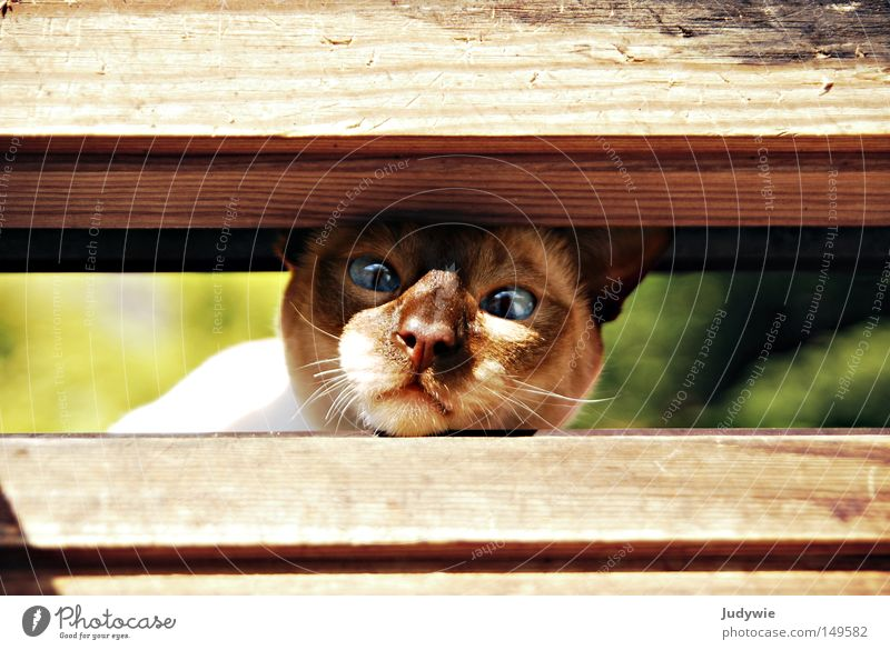 Too tight? Colour photo Animal portrait Summer Nature Window Pelt Cat Wood Blue Brown Green Fear Domestic cat Narrow Obstinate Head Nose Whisker Column Closed