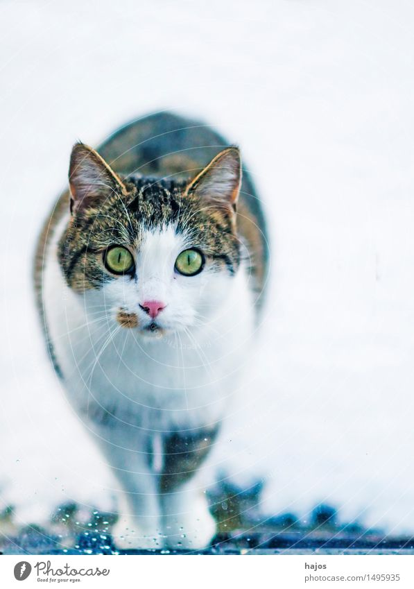 Cat Nature Beautiful White Animal Black Hair and hairstyles Fear Curiosity Living thing Pelt Watchfulness Pet