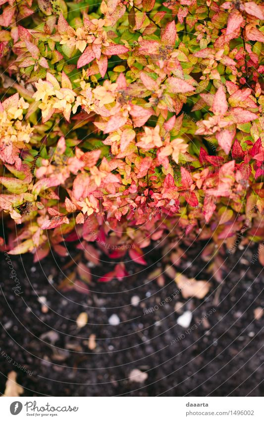 autumn leafes Nature Vacation & Travel Plant Relaxation Leaf Joy Environment Life Autumn Style Playing Lifestyle Garden Freedom Sand Bright