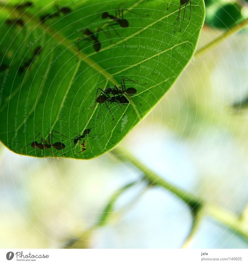 communication platform Leaf Green Tree Bushes Branch Ant Nature Animal Meeting point Summer