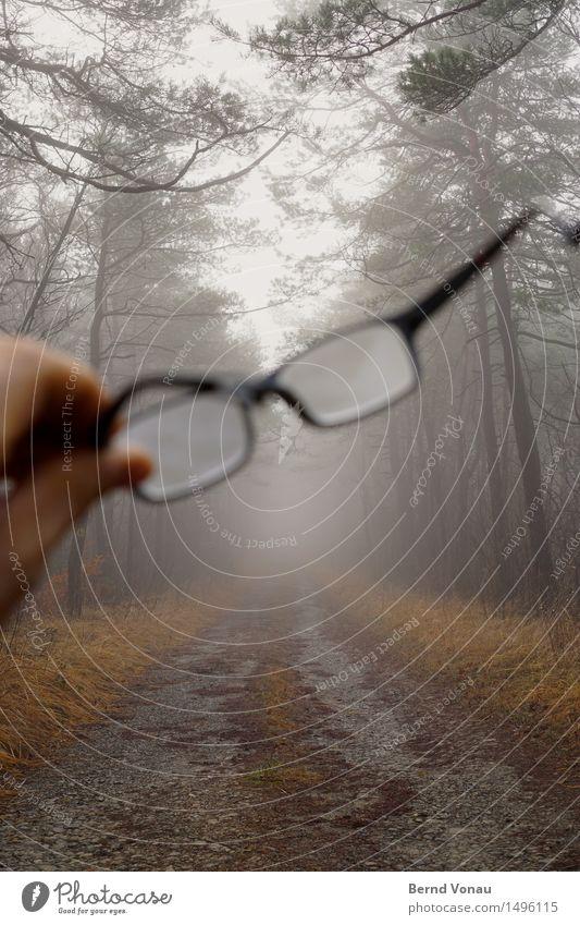 oversight Hand Emotions Eyeglasses sight loss Visible Retentive Footpath Fog Looking Tree Grass Autumn Gray Dreary Framework Glass Transparent Gravel Nature