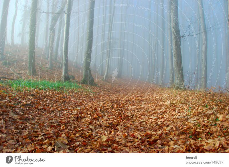 Nature Tree Green Blue Calm Leaf Black Forest Dark Cold Autumn Gray Lanes & trails Landscape Fear Fog