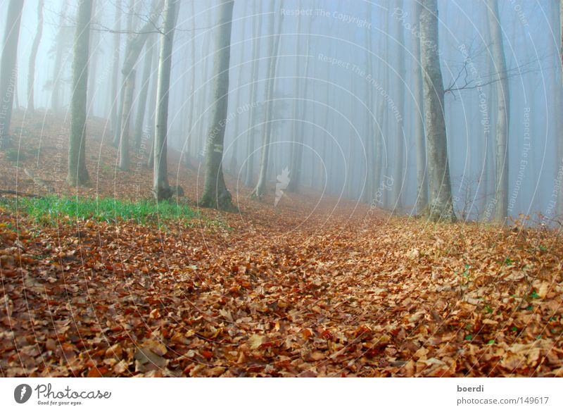 Nature Tree Green Blue Calm Leaf Black Forest Dark Cold Autumn Gray Lanes & trails Landscape Fear Fog