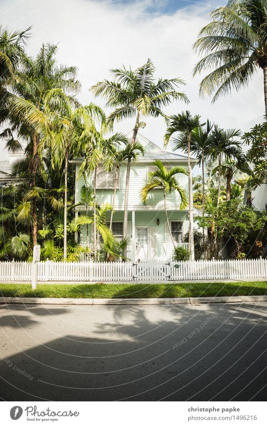 Nice cottage Nature Summer Beautiful weather Tree Palm tree Meadow Key West Florida USA House (Residential Structure) Detached house Dream house