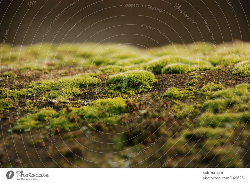 Nature Green Plant Autumn Wall (barrier) Putrefy Moss Fairy tale Molder