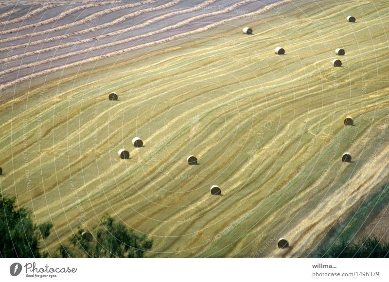 agglomeration Organic farming Agriculture Field Hay bale Bale of straw Cornfield Calm Harvest Grain harvest Grain field Autumn Summery Country life Colour photo