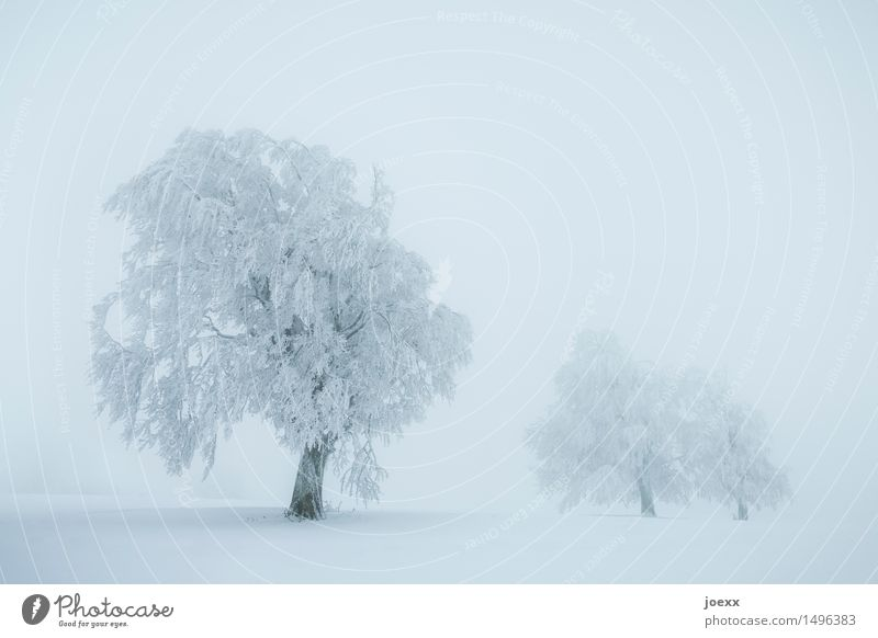 Blue White Tree Landscape Winter Cold Snow Snowfall Fog Bad weather