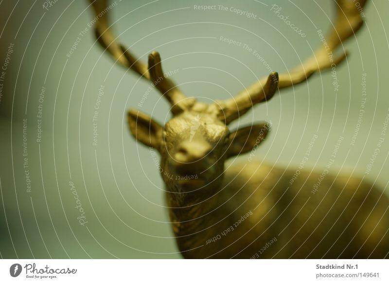 golden reindeer Reindeer Gold Antlers Nostrils Ear Pointed Eyes Snout Head Frontal Unclear Blur Motionless Figure Decoration Mammal