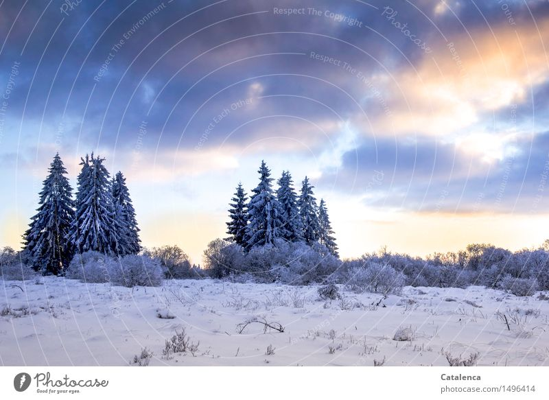 fir islands Trip Winter Snow Winter vacation Hiking Skis Cross country skiing Cross-country ski trail Landscape Plant Earth Sky Clouds Sunrise Sunset Ice Frost