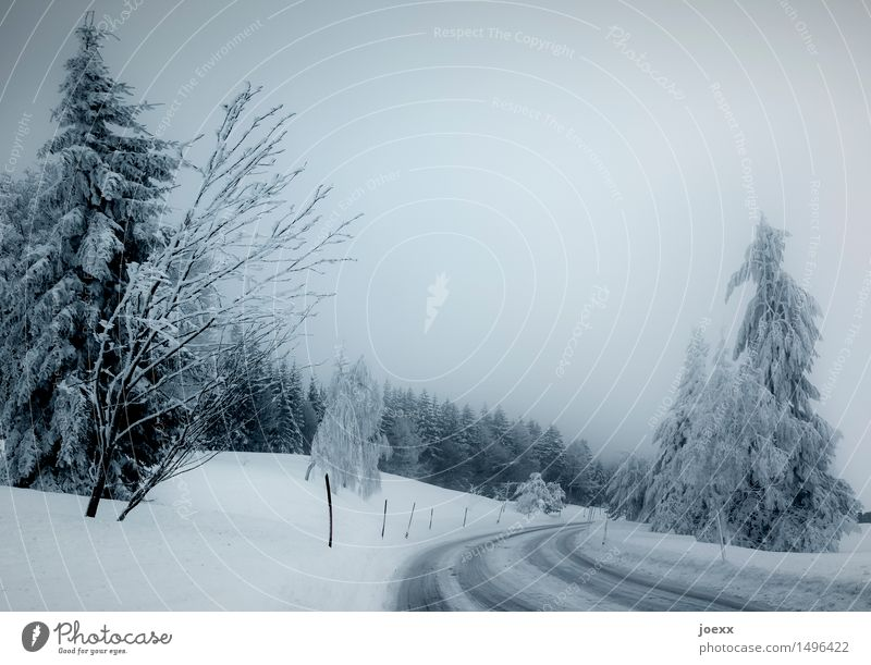 Slow Nature Sky Winter Bad weather Fog Snow Forest Street Cold Blue Black White Threat Smoothness Colour photo Subdued colour Exterior shot Deserted Day