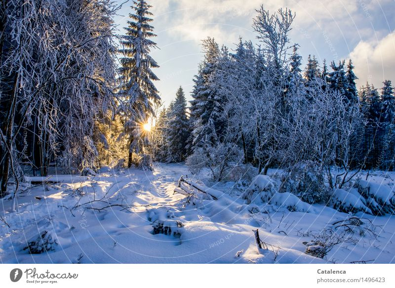 Sky Nature Plant Tree Sun Landscape Clouds Winter Forest Cold Snow Glittering Ice Leisure and hobbies Hiking Gold
