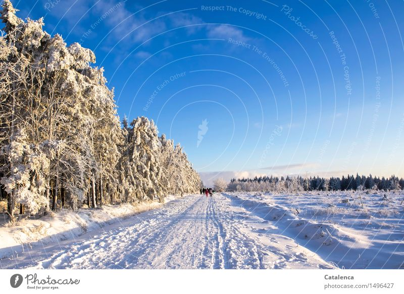Iced Venn Athletic Cross country skiing Trip Winter Snow Masculine Androgynous Family & Relations Group Nature Landscape Plant Cloudless sky Beautiful weather
