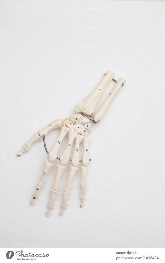 Hand Study Academic studies Advice Doctor Skeleton Replication Surgery