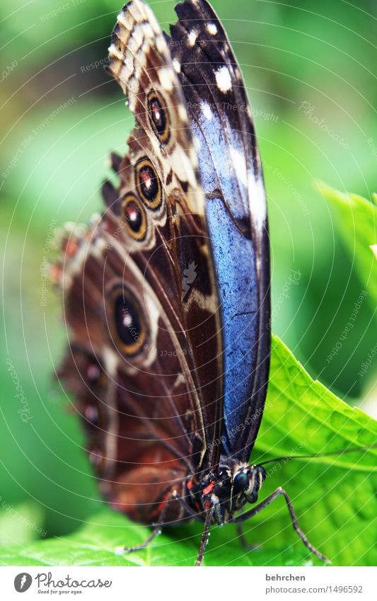 blue Nature Plant Animal Beautiful weather Tree Leaf Garden Park Meadow Wild animal Butterfly Animal face Wing blue Morphof age 1 Observe Relaxation Flying