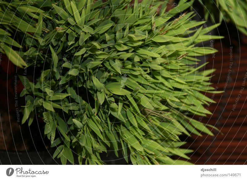 Grass whispering Green Nature Garden Field Florist Gardener Life Ecological Harmonious
