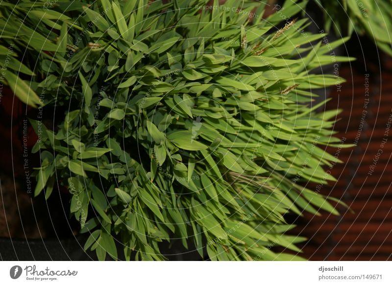Nature Green Life Grass Garden Field Ecological Harmonious Gardener Florist Merchant
