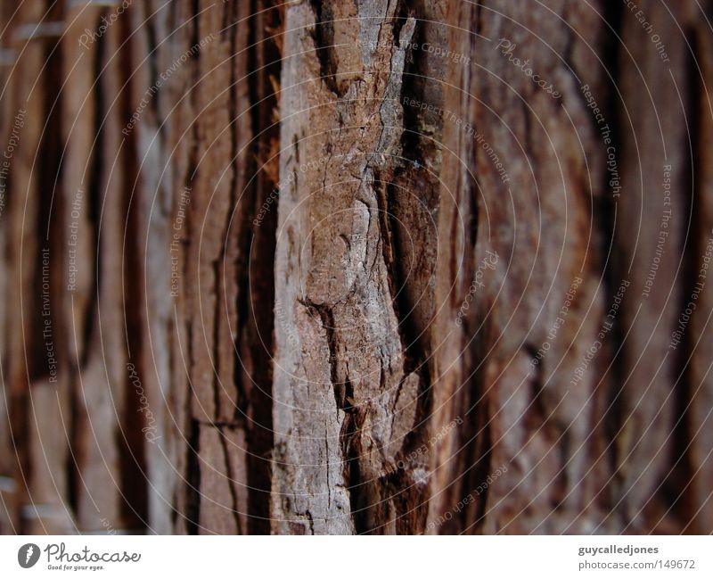 bark Summer Nature Tree bark Tree trunk Surface Depth of field Exterior shot Detail Structures and shapes Tree structure Copy Space right Copy Space left