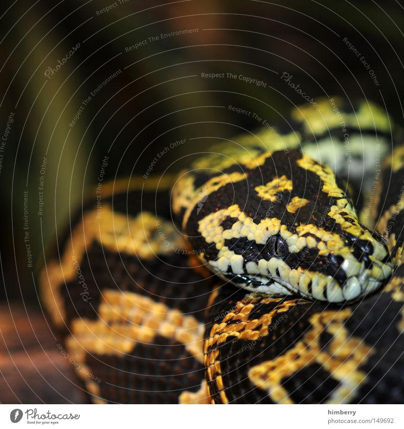 Animal Eyes Head Fear Dangerous Threat Desert Zoo Snapshot Exotic Panic Snake Hunter Timidity Reptiles Camouflage