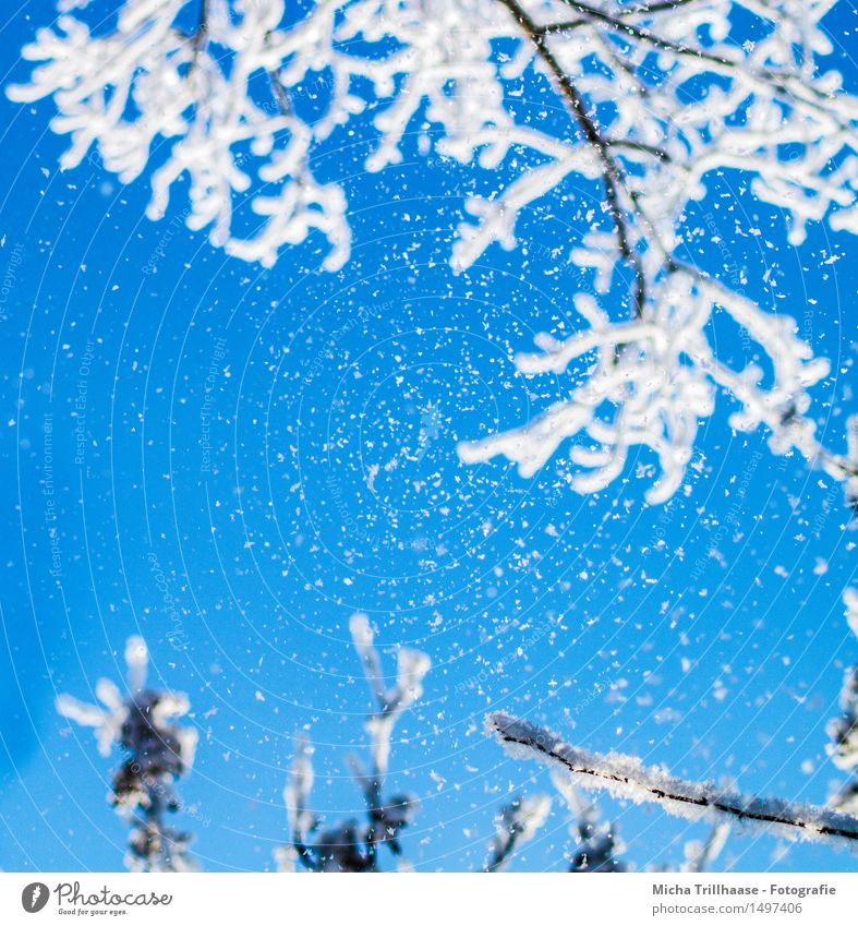 snow Winter Snow Winter vacation Nature Sky Cloudless sky Sunlight Climate Weather Ice Frost Snowfall Tree Relaxation Looking Esthetic Fresh Cold Natural Blue