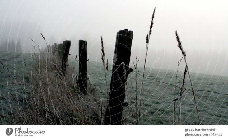 perspective ego Fog Wood Sky Meadow Clouds Gray Landscape Winter Grain Pasture