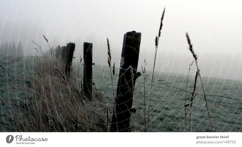 Sky Winter Clouds Meadow Wood Gray Landscape Fog Grain Pasture