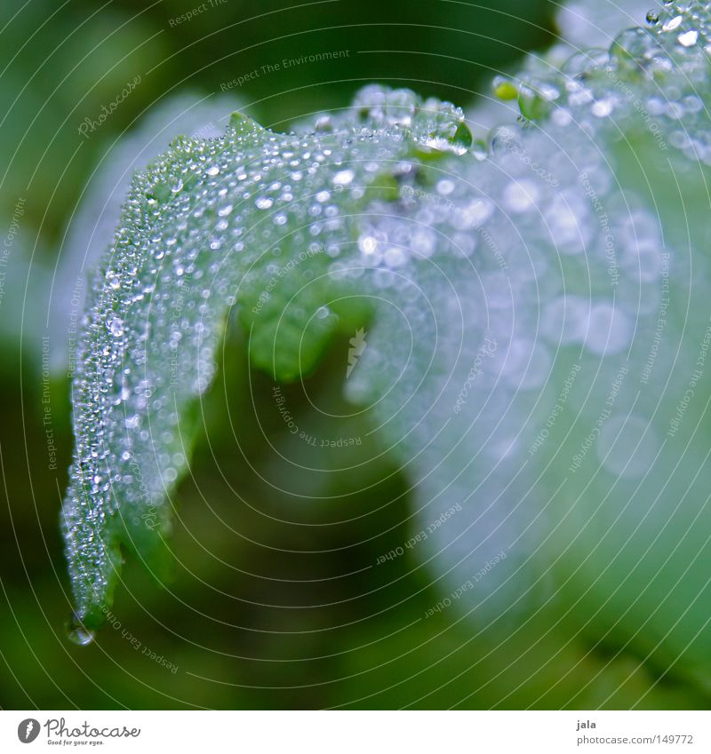 Plant Beautiful Water Leaf Life Autumn Rain Glittering Drops of water Wet Romance Drop Harmonious Thunder and lightning Damp Thirst