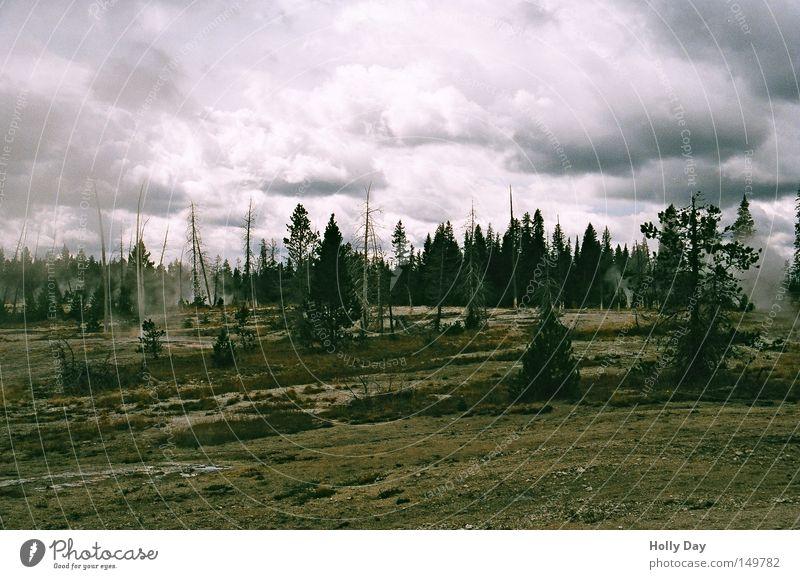 Sky Tree Clouds Dark Death Stone Sadness Brown Grief USA Smoke Fir tree Montana Steam National Park Minerals