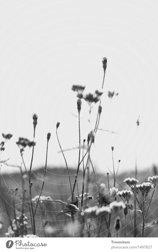"""Just missed the theme, """"colorful flower meadow."""" Nature Plant Sky Autumn Beautiful weather Flower Blossom Meadow Hill Gray Black White Flower meadow"""