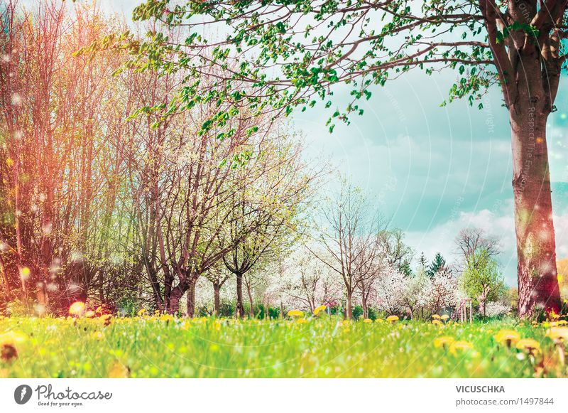 Spring nature. Background with garden or park Lifestyle Design Summer Garden Nature Landscape Plant Sky Sunlight Beautiful weather Tree Flower Grass Bushes Leaf